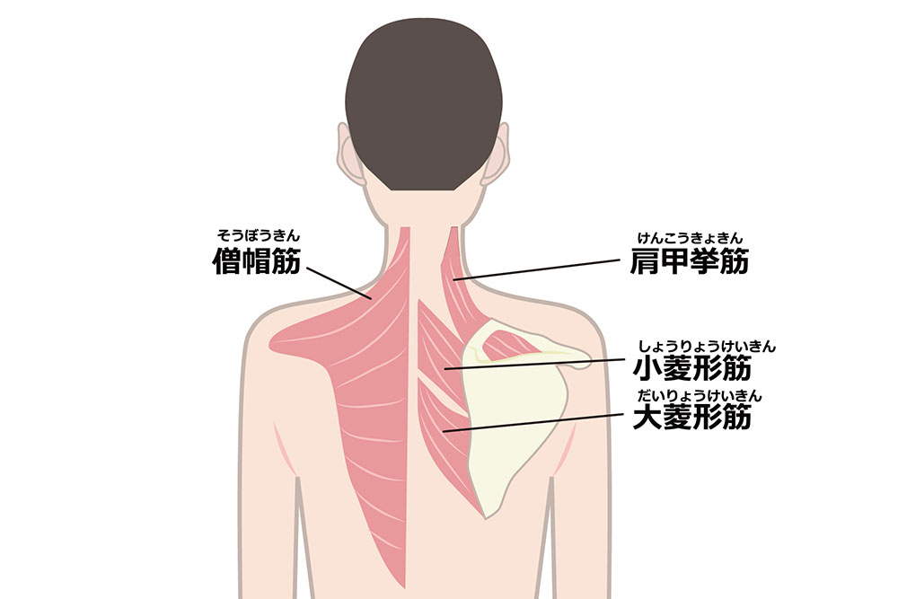 肩こり解消のポイント